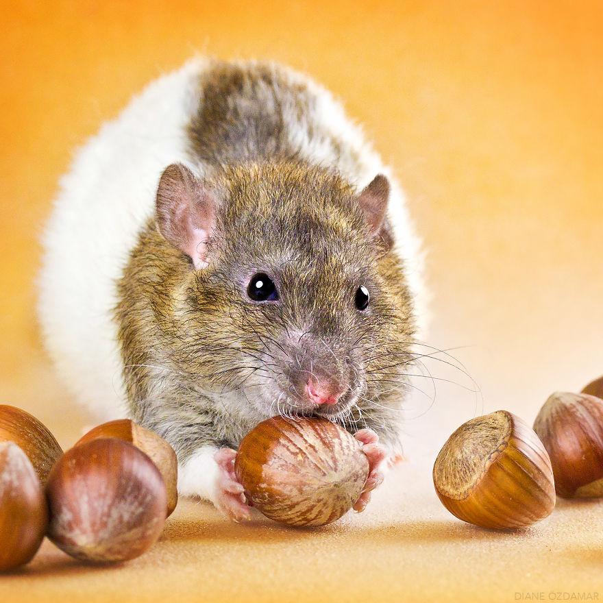 The Hazelnut Thief (Grimnir)