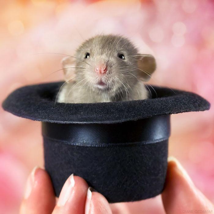 There's No Rabbit In The Hat... (Heimdall)