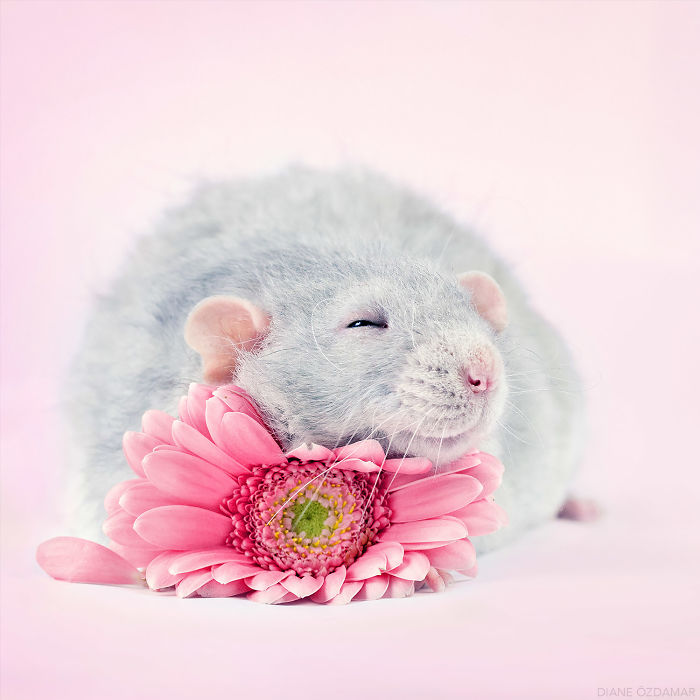 The Sweetest Pillow (Herjan)
