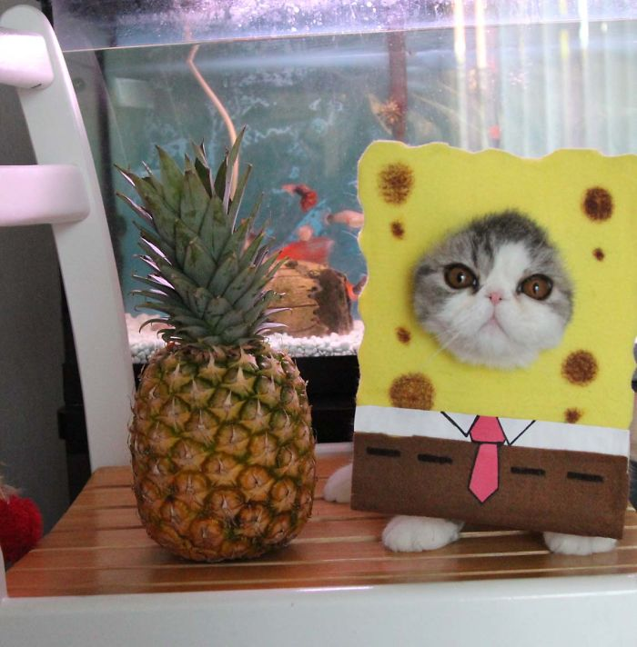 Spongecat Squarepants - Who Lives With The Pineapple And Dreads The Sea