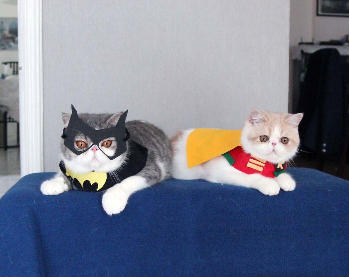 Snoopbat & Dobin