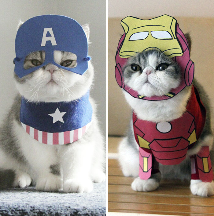 #4 Captain Cat Vs Iron Cat & I Make Costumes For My Cats | Bored Panda