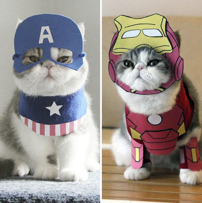 Captain Cat Vs Iron Cat