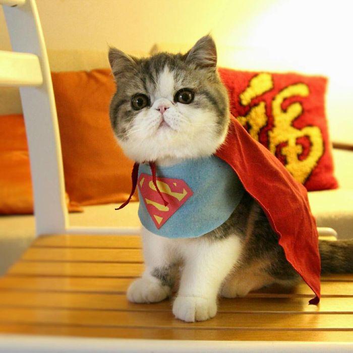 Cat Of Steel