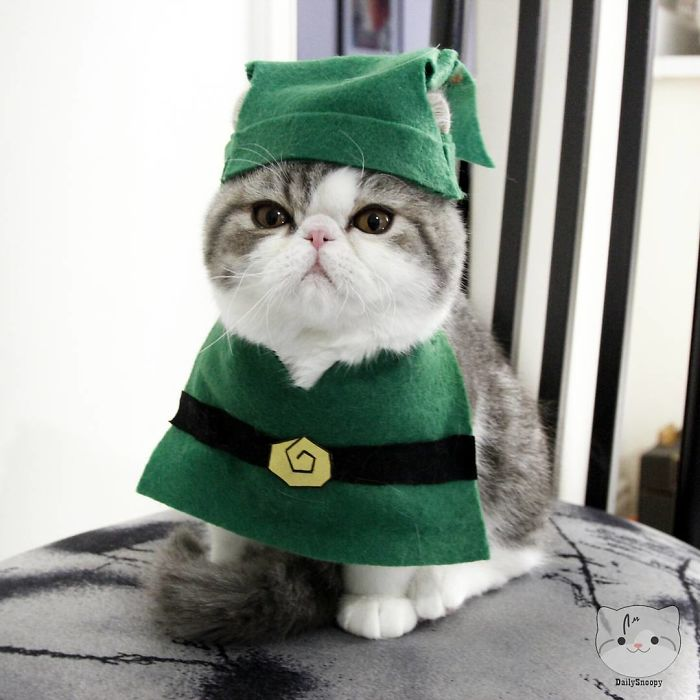No Princess Will Be Saved By This Grouchy Zelcat