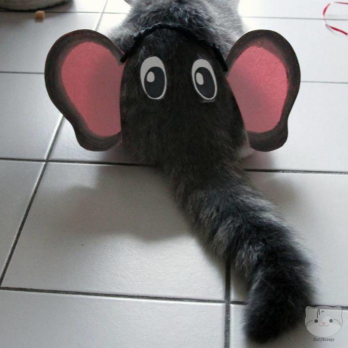 Domestic Pet Elephant