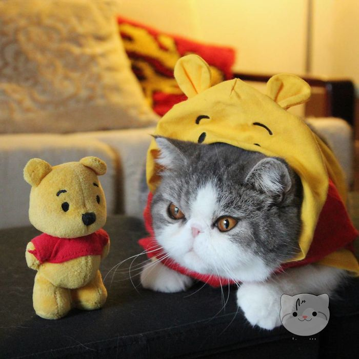 Who's The Real Pooh?