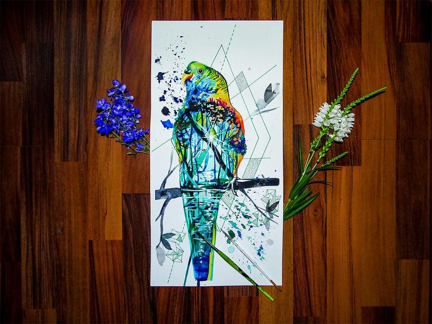 Shell Parakeet
