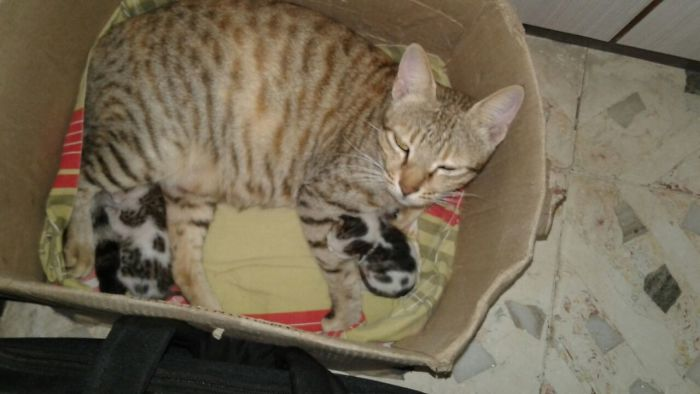 If I Fits Might As Well Have Kids