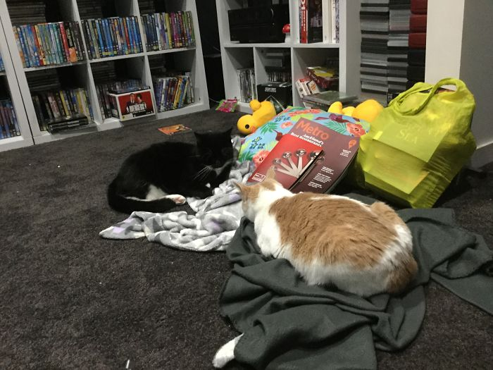 The Cats In My House Being….odd…