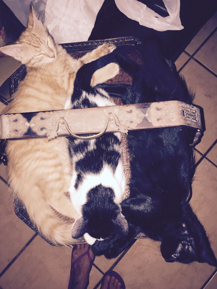 15 Inches Across.. When Obi, Pysia & Princess Of Darkness Where Babies :)