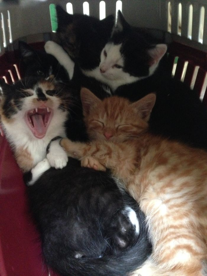 If Six Kitties Fit...