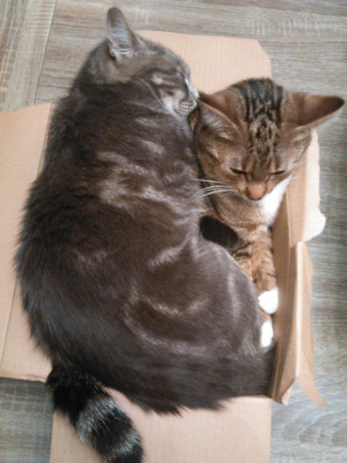 It's My Box, Not Yours !
