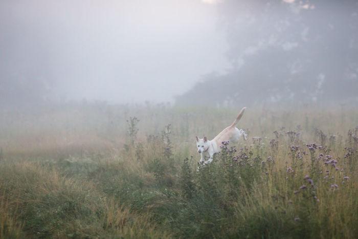 My Misty Fairy Land In Poland
