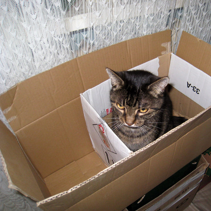She Was A Fan Of Double Boxes
