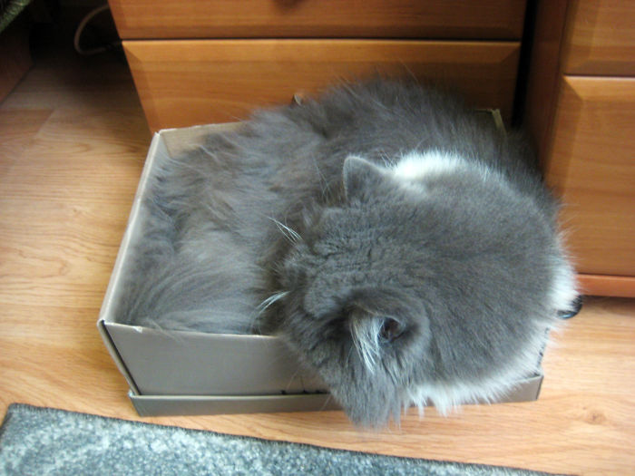 It Took A While (he's A Big Cat), But He Managed To Fit In The Shoebox ;)