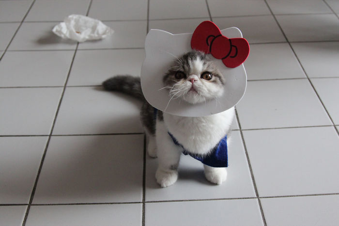 Hello Kitty Is Real