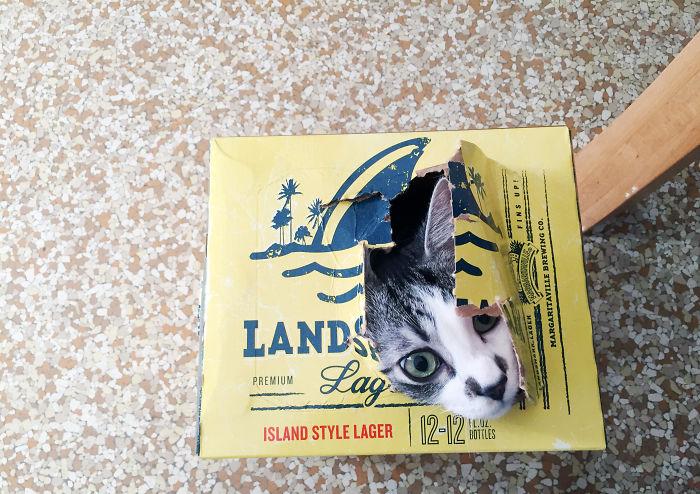 Box 'o Landshark