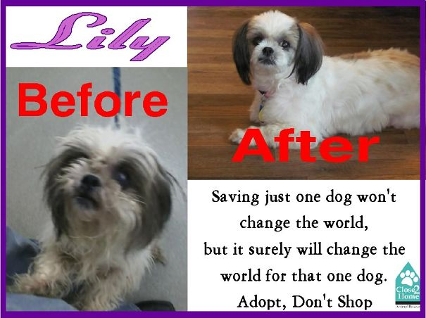 Lily-before-and-after-59763fa941386.jpg