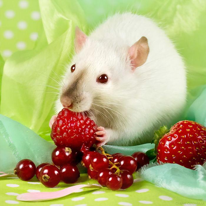 Tasty Raspberry (Louis)