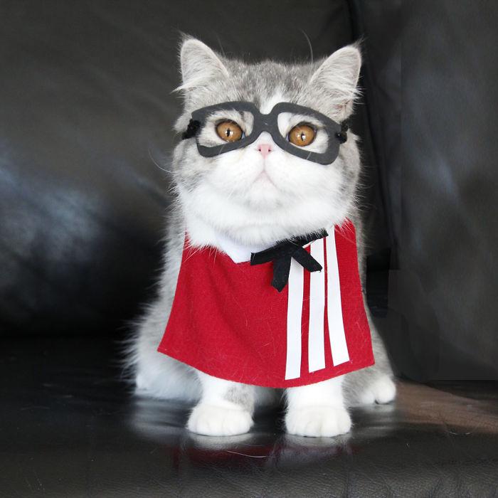 Kfcat