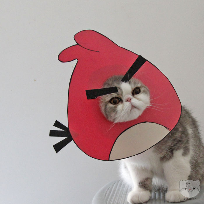 Ready To Launch This Angrycat