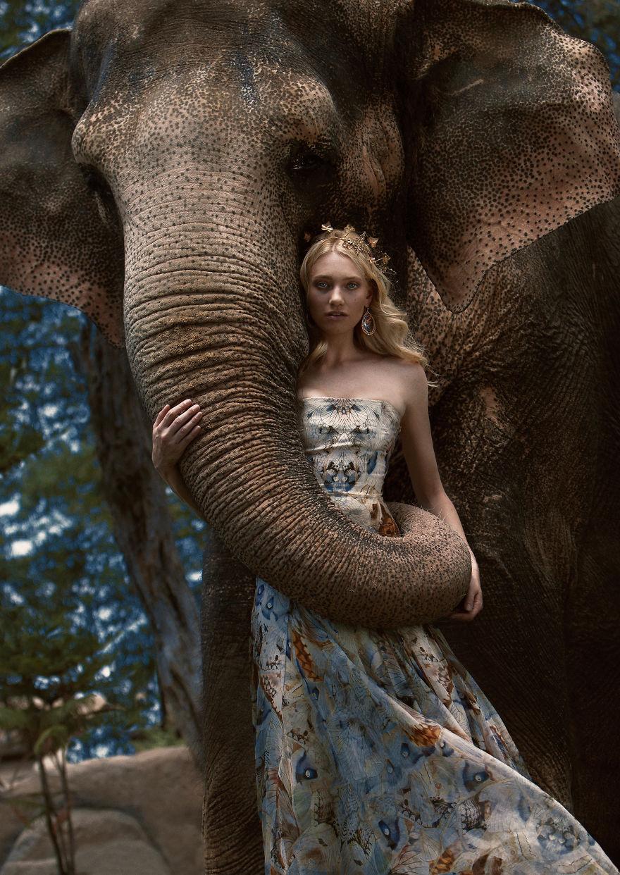 Autumn For The Elephants