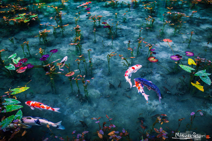 'Monet's Pond' In Japan That Looks Like Monet's Paintings.