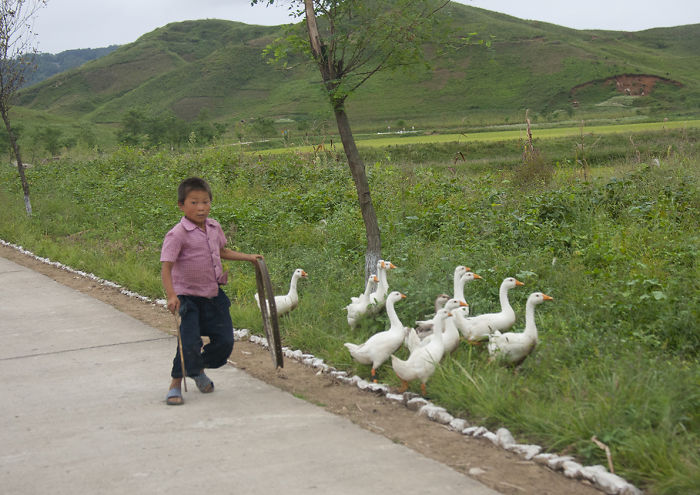 A Kid With His Gooses On The Highway Side. Most Of The Time People Use The Highway For Their Daily Activities. Therefore They Got So Surprised To See Cars Or Buses On It