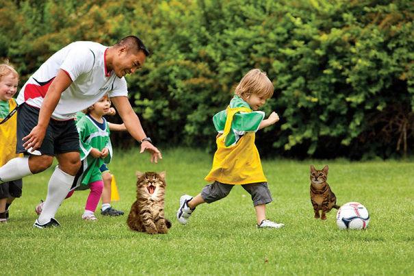Take The Kitten