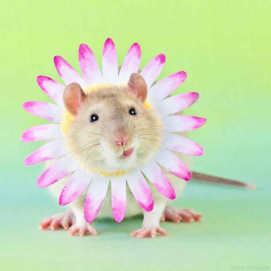 Trust Me, I'm A Daisy (Tjall)