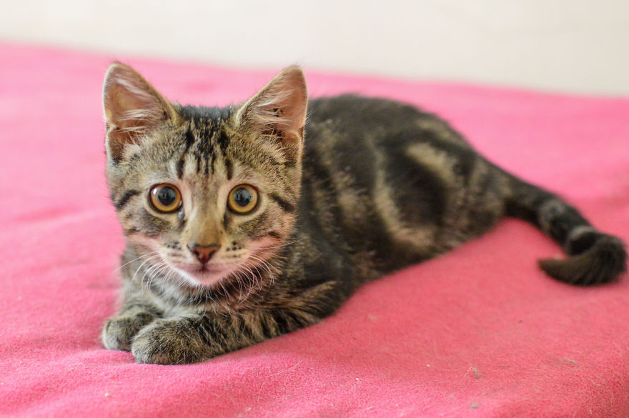 Kitten Is Looking For Home, 3 Month Old