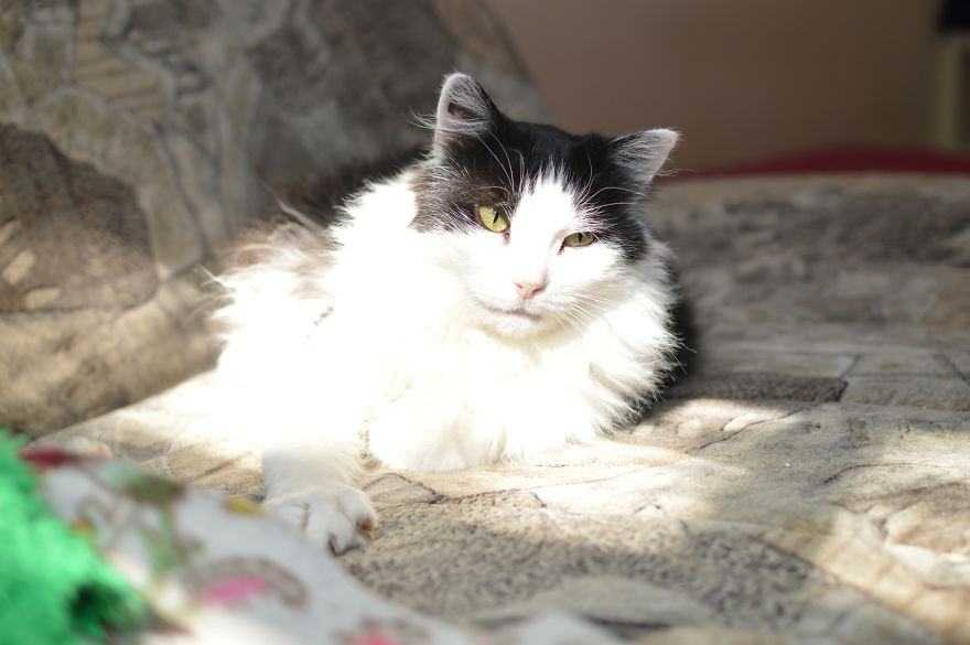 Cat Is Looking For Home, 7 Years Old