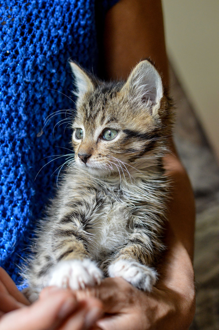 Kitten Is Looking For Home, 2,5 Month Old
