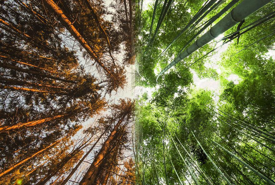 Леса в Норвегии против лесов в Японии