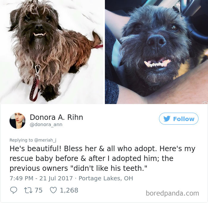 """""""My Sister Adopted Her Very First Dog And His Before & After Pics Have Me Crying"""""""