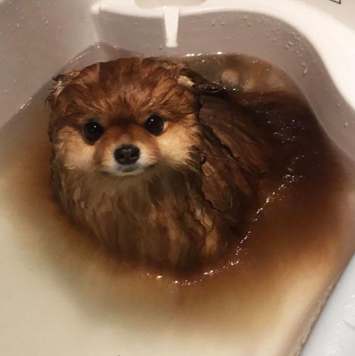 Некоторые собаки растворяются в воде!