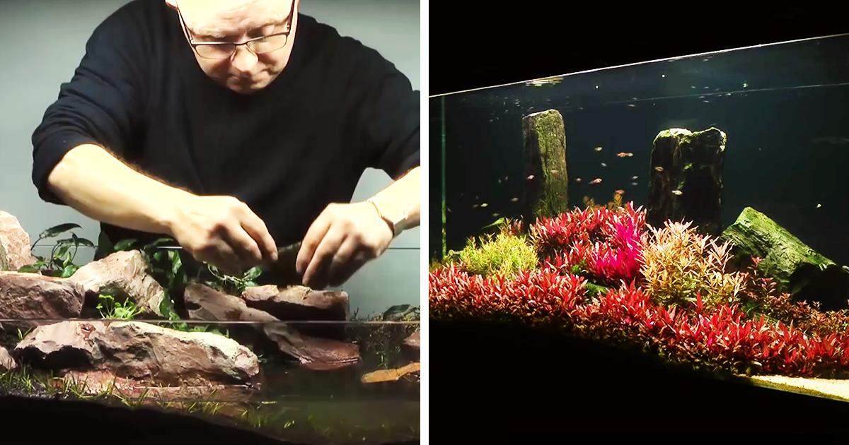 Aquascaping: The Art Of Aquarium Decoration