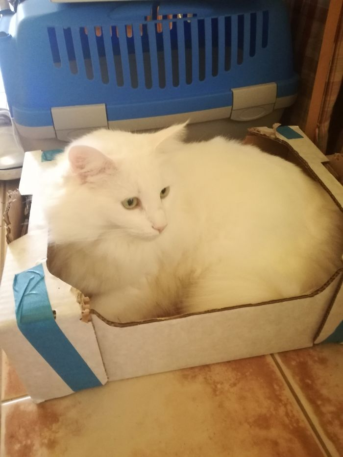 My Coco... She Loves This Box