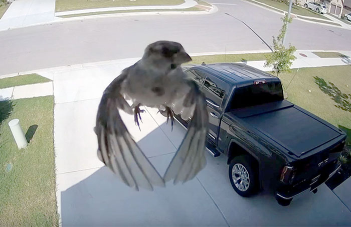Bird's Wings Get Perfectly Synced With Camera's Frame Rate And It Will Mess With Your Mind