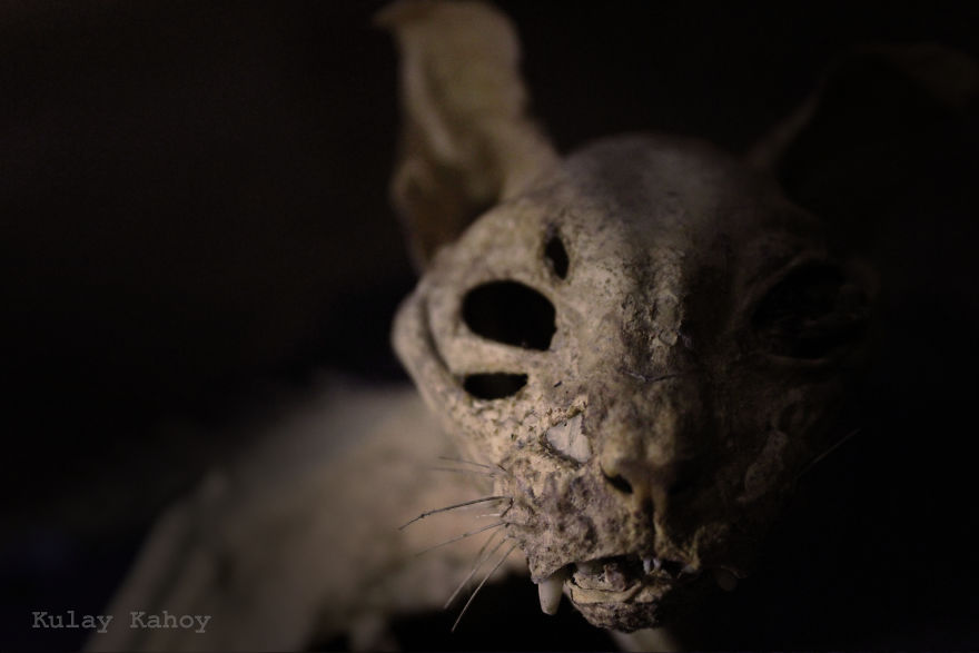 Photographer Took A Photo Of A Mummified Cat Found In A Ceiling