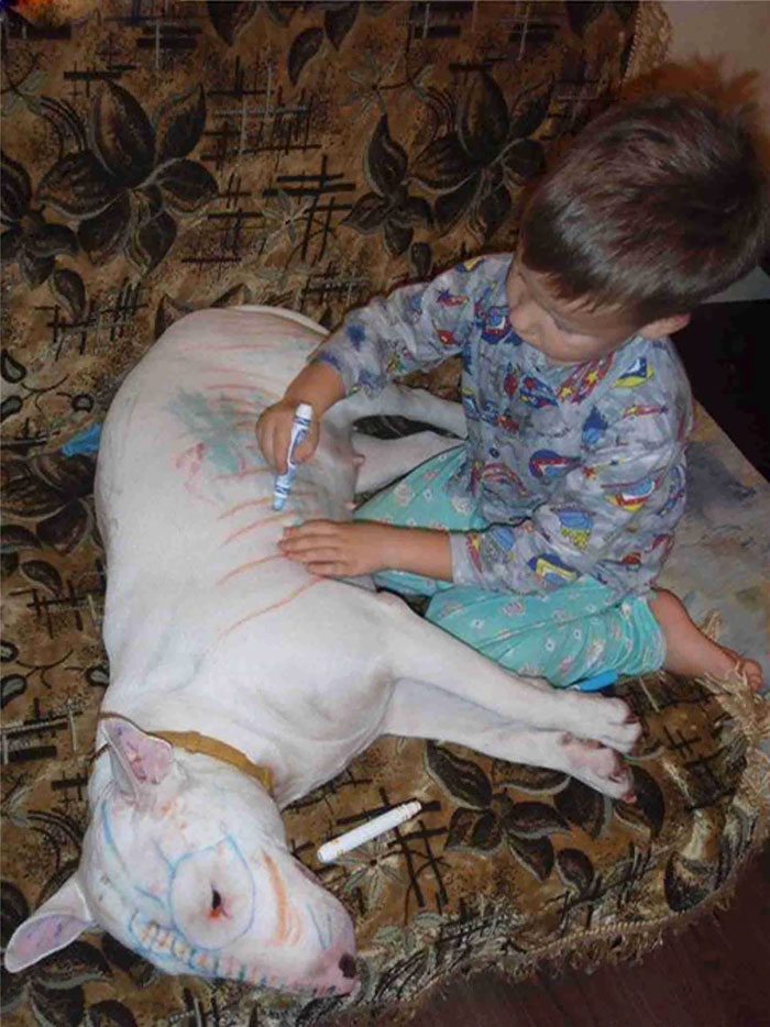 Never Leave A Child And A Bull Terrier Alone In The Same Room