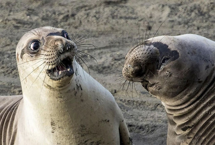 Wtf?!, San Simeon, California By George Cathcart