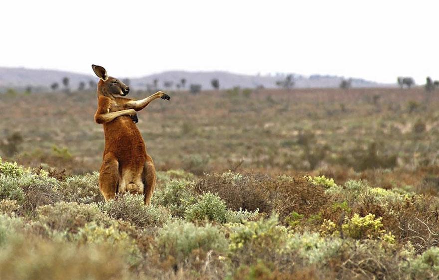 Kung Fu Training - Australian Style, Flowers Gap, Australia By Andrey Giljov