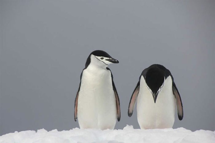 Trouble In Parad'ice, Antarctica By Peter Odeh