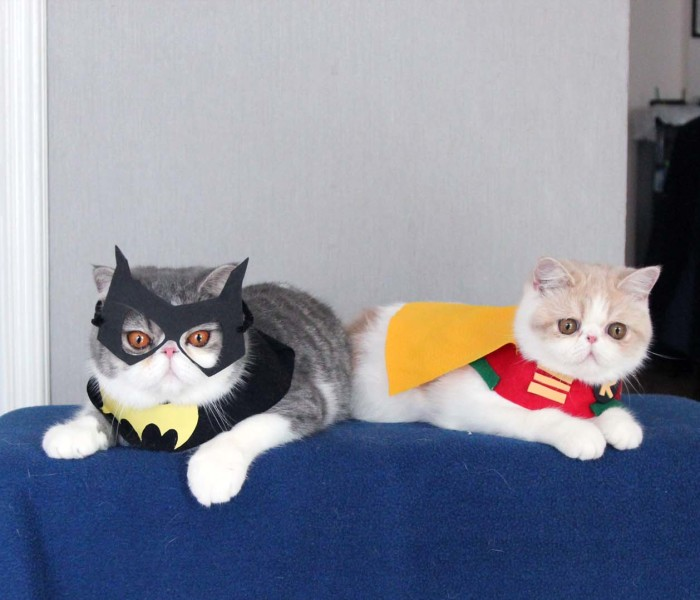 I Make Costumes For My Cats