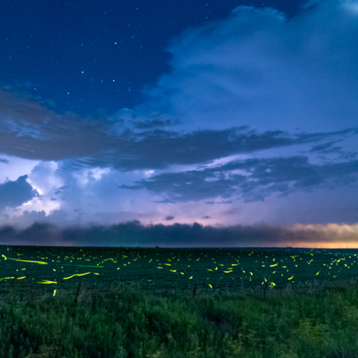 Lightning And Fireflies Time Lapse