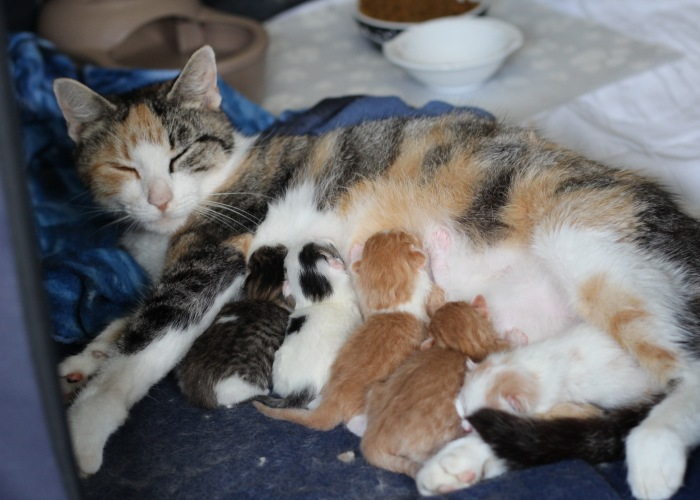 These Four Mother Cats Were Left Behind When Their Kittens Were Adopted