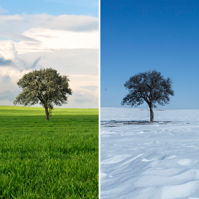Lonely Tree And The Seasons Passing By