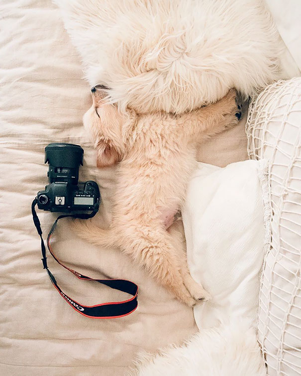 Goldie Nap Time
